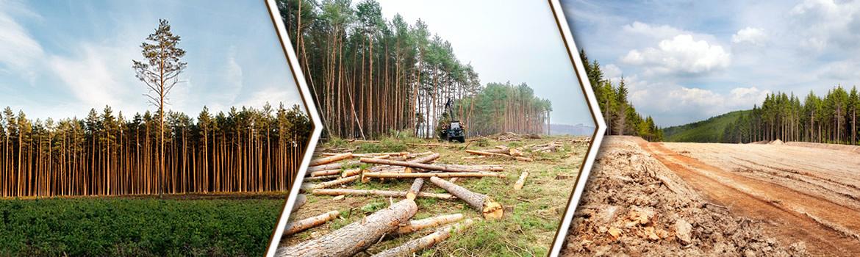 karczowanie-lasow